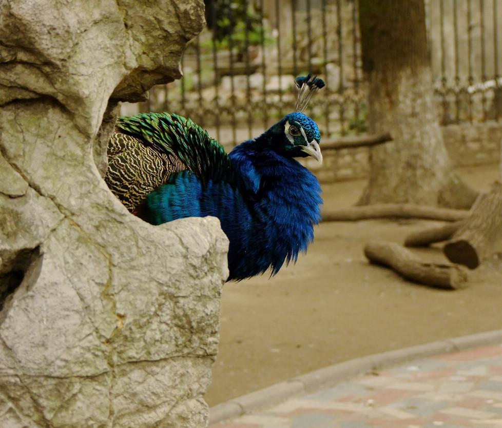 作品描述:拍摄于荆州市动物园.春天来了,动物们的心情也好了起来.